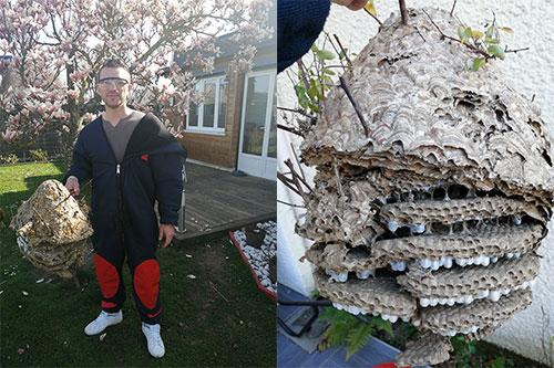 nid de guèpes 95