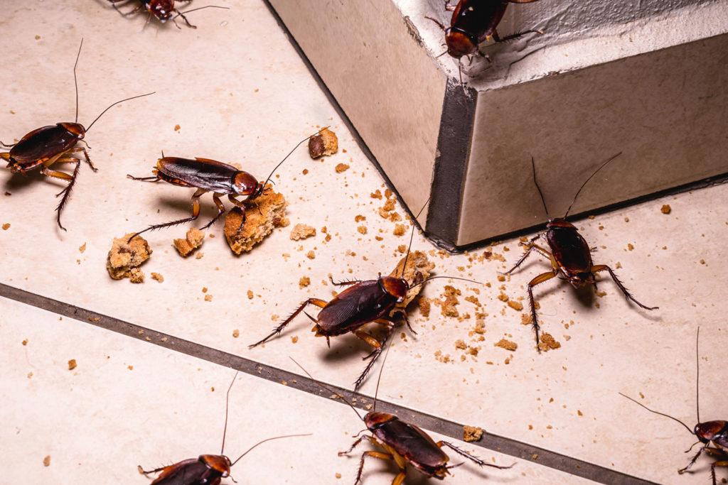 Traitement des blattes et fourmis 95